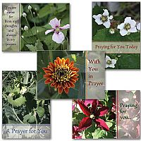 Praying For You Collection