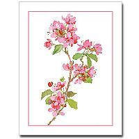 Pink Apple Blossoms Petite Notes