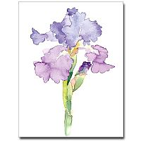Watercolor Iris Petite Notes